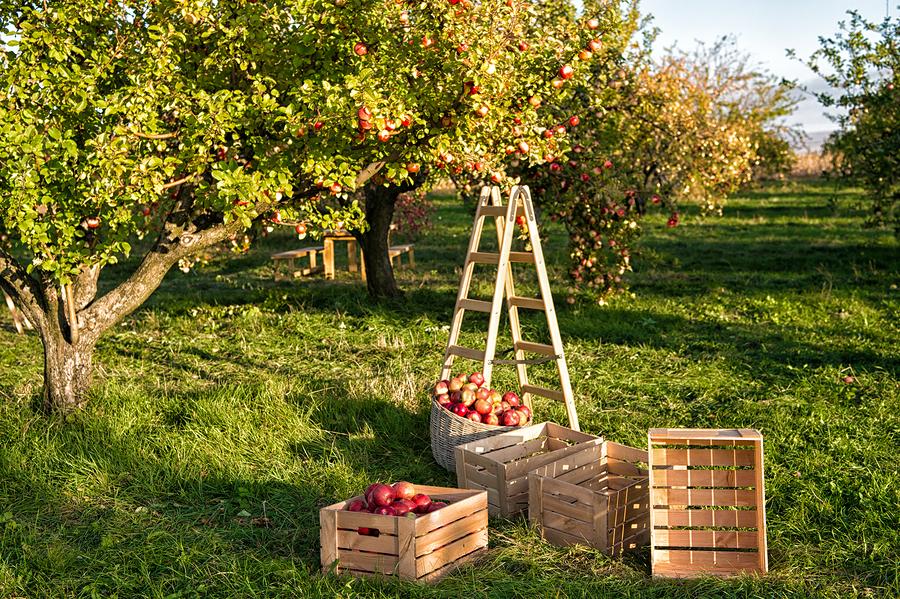 Stockfoto-ID: 263768302 Copyright: photosvit, Bigstockphoto.com